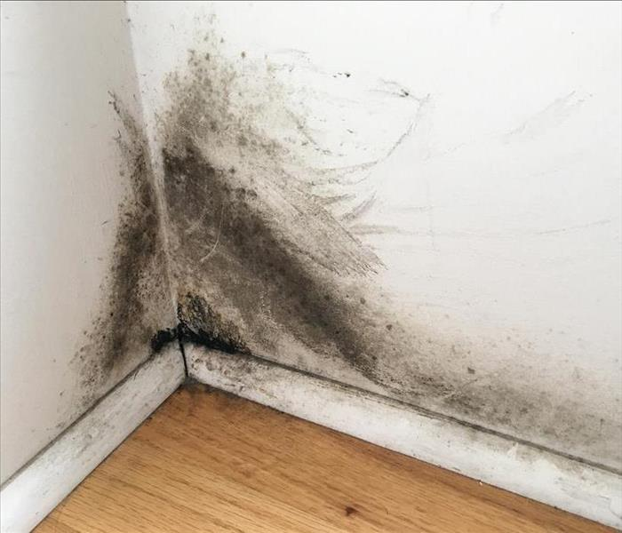 Mold on the walls of a room.
