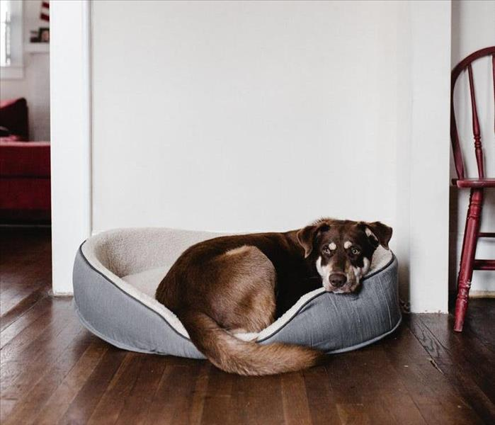 A dog in its bed